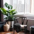 Стул Wishbone, мебель, дизайн интерьера, мебель
